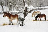 Horses in Winter — Zdjęcie stockowe