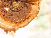 Honeycomb with honey and young bee  — Photo