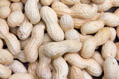 Peanuts seen up close — Foto de Stock