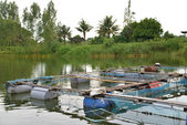 Fish farm located in thai country — Stock Photo