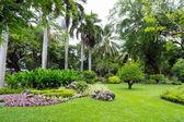 Green garden view — Stock Photo