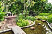 Backyard Pond landscape — Stock Photo