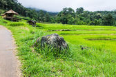 Beautiful green Rice Terraces in Doi inthanon, Maeglangluang — Stock Photo