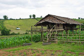 Cottage in a corn field in Chiangmai — Stock Photo