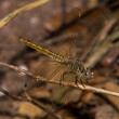 Stock Photo: Dragonfly on nature, macro