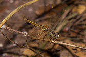 Dragonfly on the nature, macro — Stock Photo