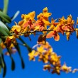 Orchid on the sunny blue sky — Stock Photo