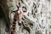 Giraffe statue in Chiangmai Zoo, Thailand — Stock Photo