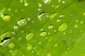 Macro drops of water on the leaves — Stock Photo