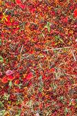 Paw kwiaty spada — Zdjęcie stockowe
