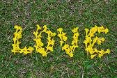 Love Form Golden tree flowers — Stock Photo
