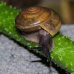 Snail on green stem — Stock Photo