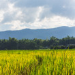 Stock Photo: Green rice fields in north Thailand