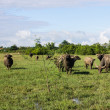 Masses Buffalo And The tilted in Grass — Stock Photo #38276983