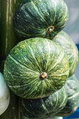 Market Stall Pumpkins in Baskets Closeup — Stock Photo