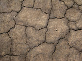 Texture of cracked soil — Stock Photo