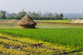 Rice field with straw in thailand — Stock Photo