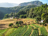 Agriculture in Doi Inthanon National Park — 图库照片