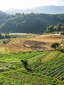 Agriculture in Doi Inthanon National Park — Stock Photo