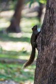 Squirrel on Tree — Stock Photo