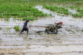 Asia Farmer using tiller tractor in rice field — Stok fotoğraf
