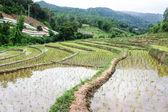 Rice field terraces in doi inthanon, Ban Sob Aeb Chiangmai Thailand — Stockfoto