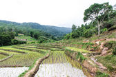 Rice field terraces in doi inthanon, Ban Mae Aeb Chiangmai Thailand — 图库照片