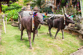 Sculpture of two bulls with cart — Stock Photo