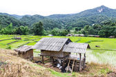Rice field terraces in doi inthanon, Ban Mae Klang Luang Chiangmai — Stock Photo