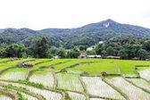 Rice field terraces in doi inthanon, Ban Mae Klang Luang Chiangmai — Stock Photo