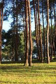 Pang Ung Forestry Plantations, Maehongson, North of Thailand  — Foto Stock