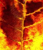 Red leaf macro  — Stock Photo