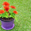 Flower in the pot on grass field  — Stock Photo