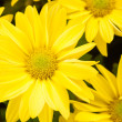 Stock Photo: Yellow flower background