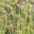 Barley field — Stock Photo #38716449