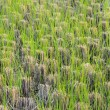 Barley field — Stock Photo #38716559