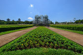 Botanical garden, Curitiba, Brazil  — Stock Photo