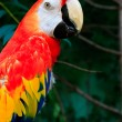Beautiful parrots — Stock Photo #34883541