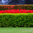 Image of garden — Stockfoto