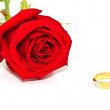 Rings on a background of roses — Stock Photo