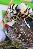 Portrait of a great horned Owl — Stock Photo