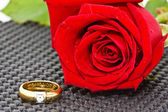 Rings on a background of roses — ストック写真