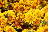Beautiful orange-yellow floral background — Stock Photo