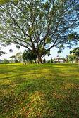 лесные деревья. природа зеленый дерево картинки — Стоковое фото