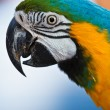 Stock Photo: Parrot over natural background