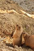 Carino scoiattolo di terra nel parco mini zoo — Foto Stock