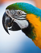 Parrot over natural background — Stock fotografie