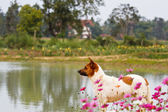 Hunting dog on fresh green grass in public park  — Stock Photo