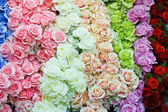 Schöne rosen im feier-konzept — Stockfoto