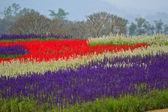 Flower in garden of thailand — Photo